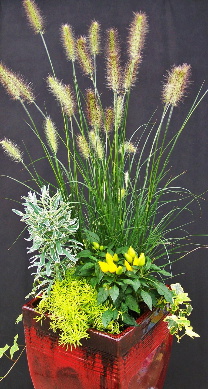 Seasonal planter with Pennisetum 'Hameln', ornamental pepper, Euphorbia and sedum.