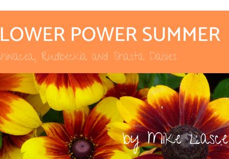 Flower Power Summer – Echinacea, Rudbeckia and Shasta Daisies