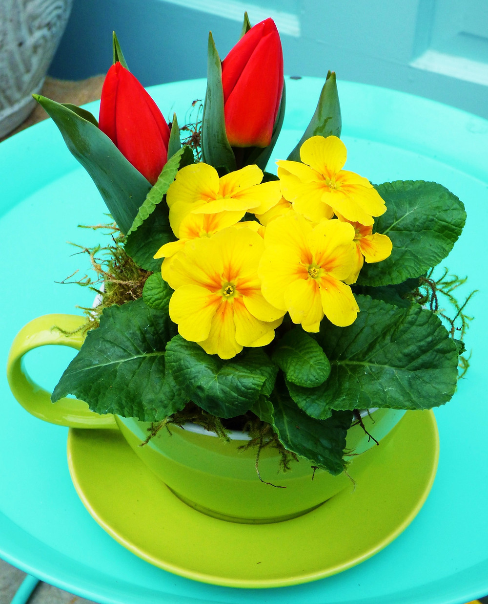 Polyantha teacup planter