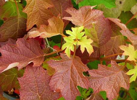Your Guide to Autumn Foliage