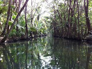 Dominica entdecken Segeltörn