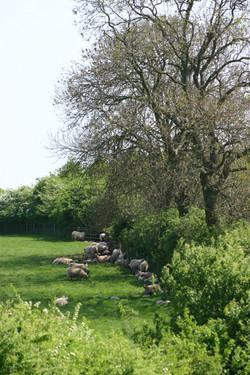 Sulgrave Farm