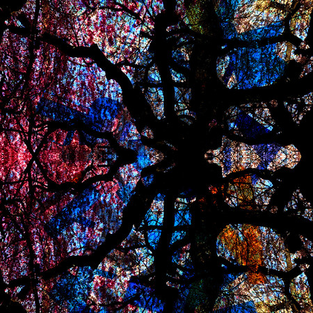 Stained glass inspired by trees