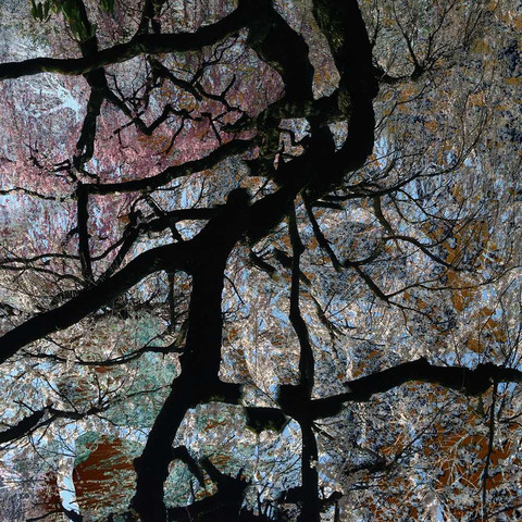 Abstract photos of trees