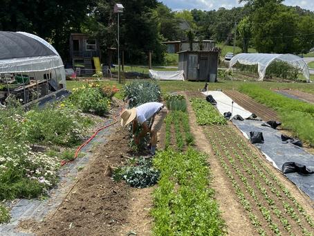 Mountain Roots Farm