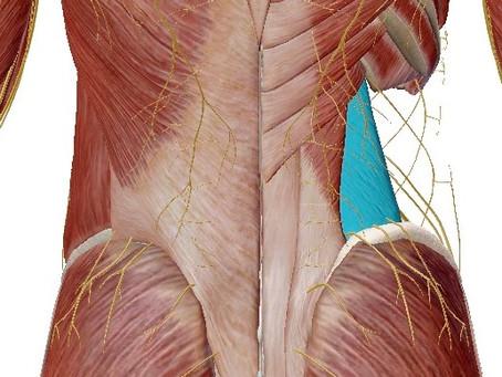 腰痛の一種 腰方形筋痛について