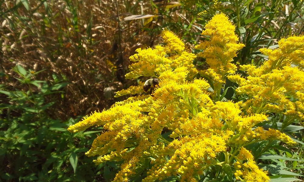 happy bee on yellow.jpg