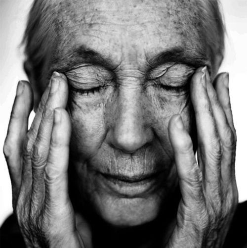 Jane Goodall-byPhilipPhorakCom.jpg