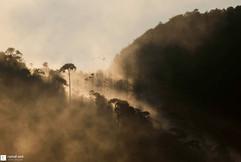 Perruches dans la brume
