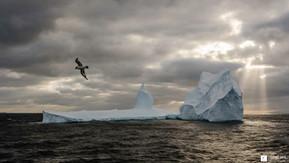 Le damier et l'iceberg