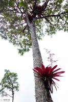 Epiphyte mon amour