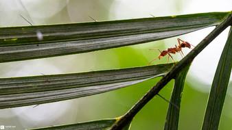 La palme et la fourmi