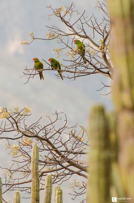 Trois perruches sur un arbre