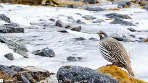 Près de la rivière gelée