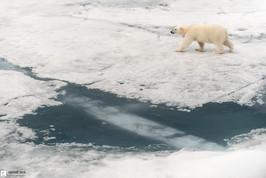 Le vagabond des glaces
