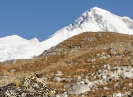 Et la montagne accoucha d'un oiseau