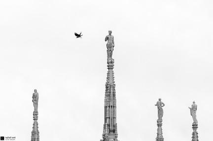 Il Duomo e il corvo