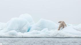 Mon iceberg, mon île