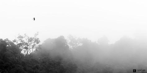 Sur la jungle embrumée