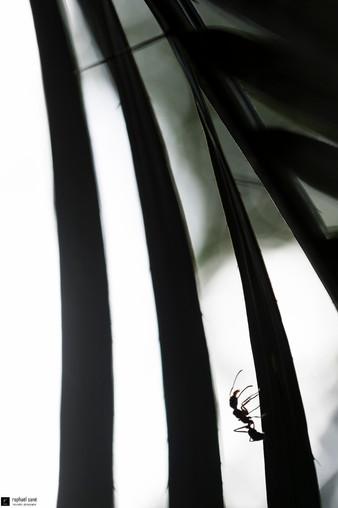 La fourmi et la palme