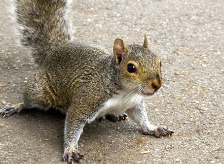 Squirrels Removal & Prevention - Frequently Asked Questions & Answers