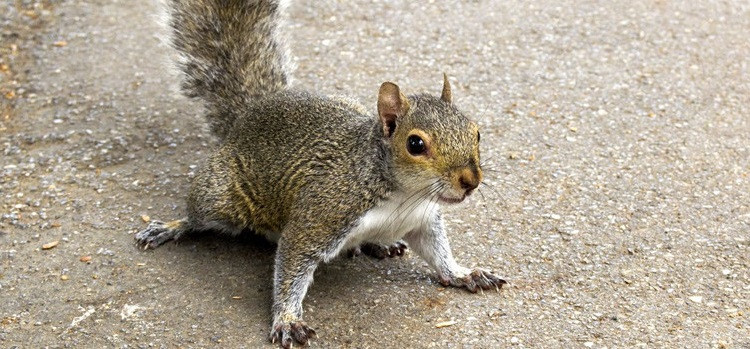 wild animal squirrel in your house
