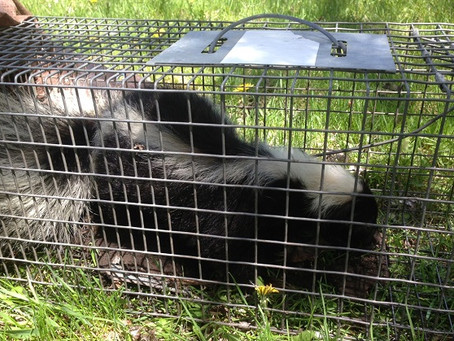 5 Reasons to Hire a Professional Wildlife Removal Company