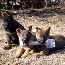 Чекист, Чаруша, Чикитита 2 месяца.
