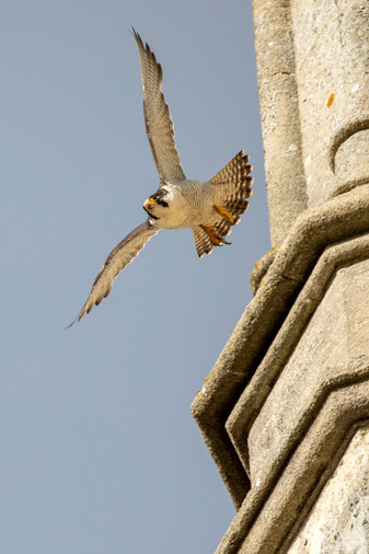 Peregrine - Flight Check