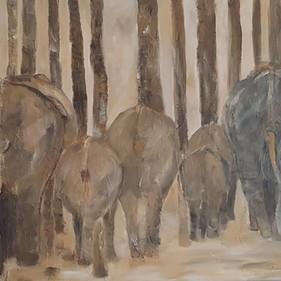 Back of Elephants