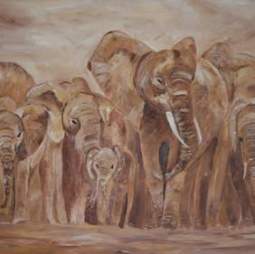 Elephants 9