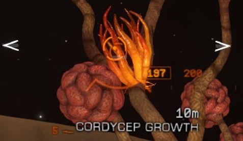 cordycep.jpg