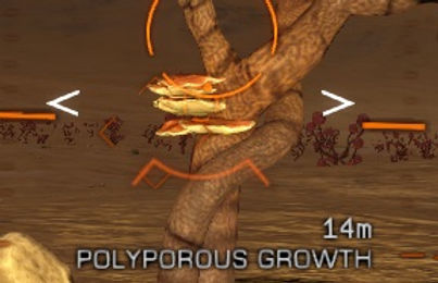 polyporous.jpg
