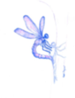 dragon fly.jpg