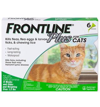 Frontline.jpeg