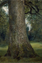 Detail of study of an Elm Tree by John Constable