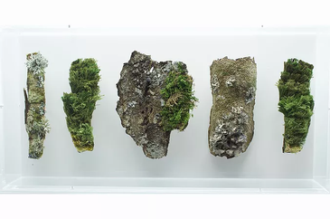 Bark, Moss and Lichen by Amanda Cobbett