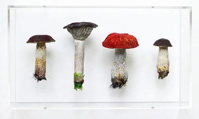 Toadstools by Amanda Cobbett