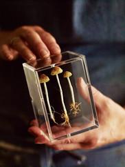 Fungi by Amanda Cobbett