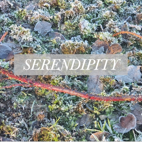 Serendipity: hard work, (seemingly) random decisions and the faith of others. Part 1