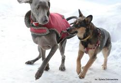 Echo i Nitka