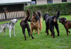 Saszka, Pies, Bella, Dylan i Sheesha