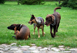 Sheesha, Nitka i Pies
