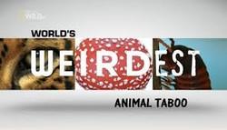 animal Tabbo