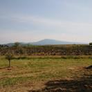 Nouveau: Bientôt une Huile d'Olive 100% Bio produite au Domaine & lancement de l'étiquet