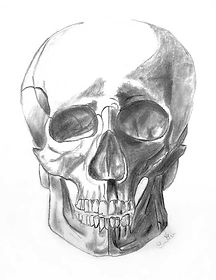 Lexin-Skeleton-Head.jpg