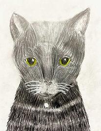 Zophie-Cat.jpg