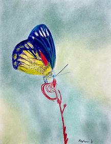Rylen-Butterfly.jpg