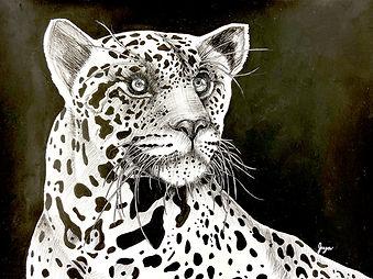 Jiya-Leopard.jpg
