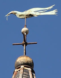 Web dove. slim.jpg
